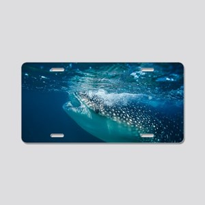 Whale shark filter feeding Aluminum License Plate