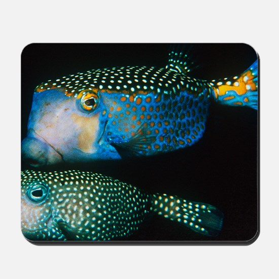 Whitespotted boxfish Mousepad