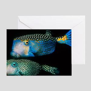 Whitespotted boxfish Greeting Card