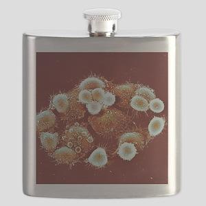HeLa cells, SEM Flask