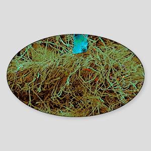 Household dust Sticker (Oval)