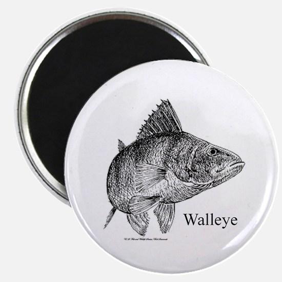 Walleye Magnet