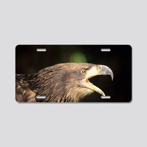 Young bald eagle Aluminum License Plate