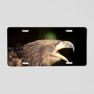 Young bald eagle Aluminum License Plate