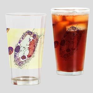 Leishmania protozoa, TEM Drinking Glass