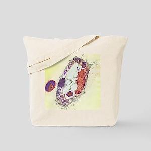 Leishmania protozoa, TEM Tote Bag