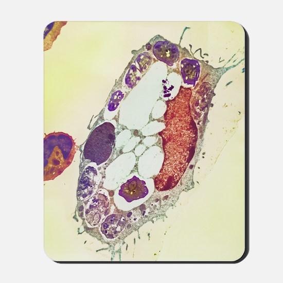 Leishmania protozoa, TEM Mousepad