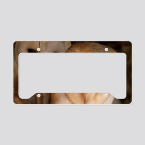 Young barn owls License Plate Holder