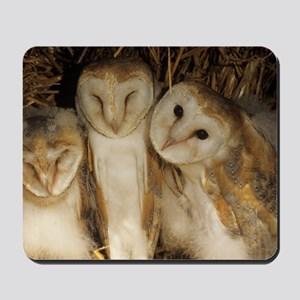 Young barn owls Mousepad