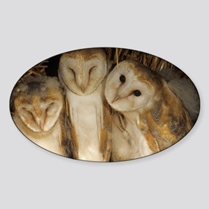 Young barn owls Sticker (Oval)
