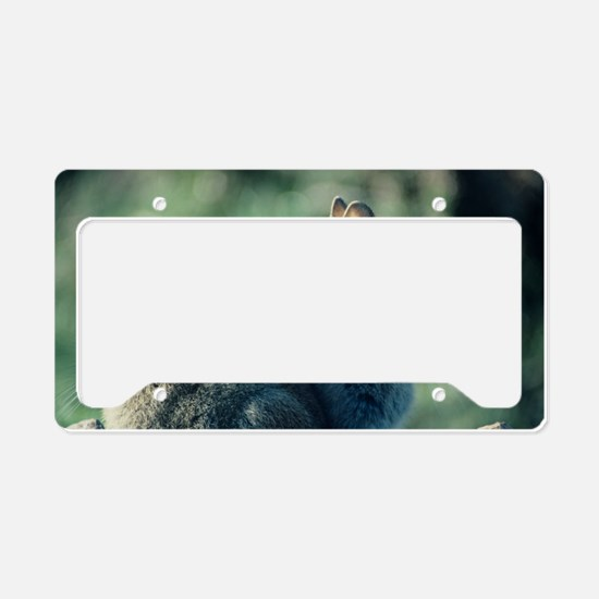 Young European rabbits License Plate Holder