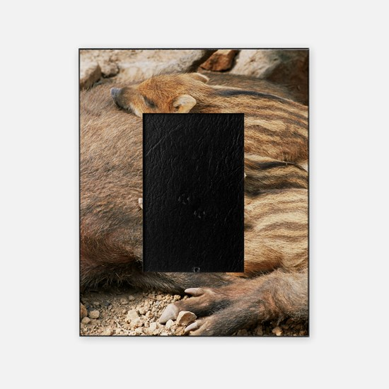 Young wild boar Picture Frame