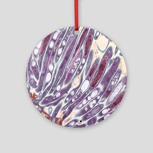 Malaria parasites, TEM Round Ornament