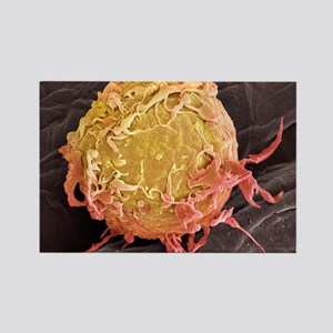Lymphoma cancer cell, SEM Rectangle Magnet