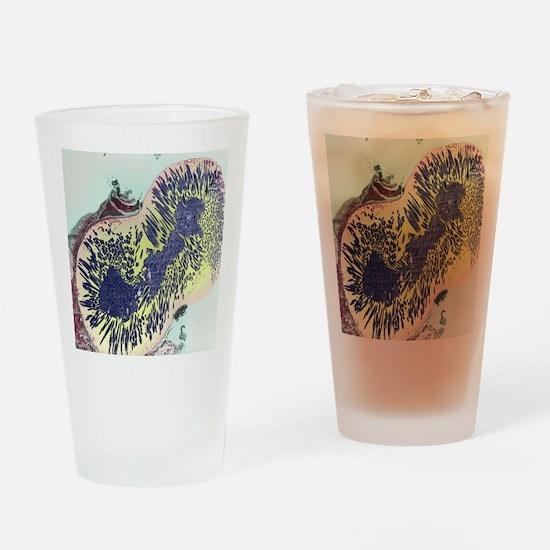 Malaria parasites, TEM Drinking Glass