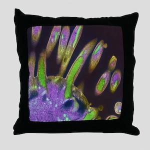 Malaria parasites, TEM Throw Pillow