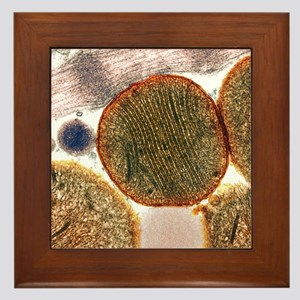 Mitochondria Framed Tile