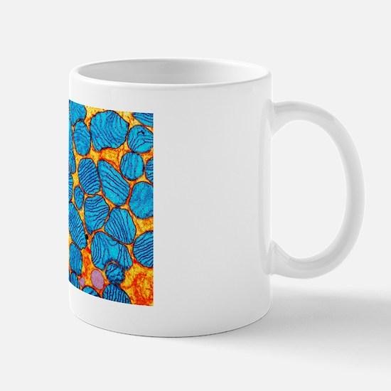 Mitochondria, TEM Mug