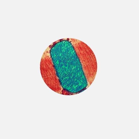 Mitochondrion, TEM Mini Button