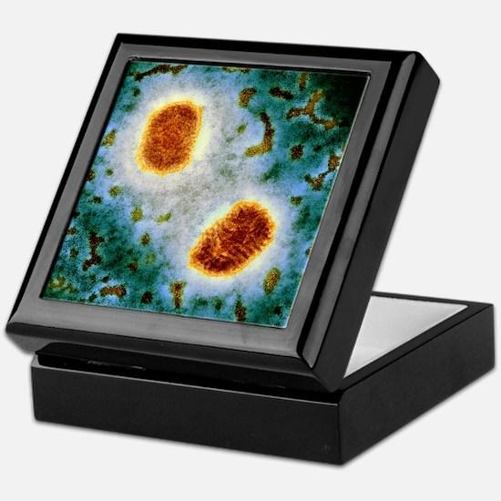 Molluscum contagiosum virus, TEM Keepsake Box
