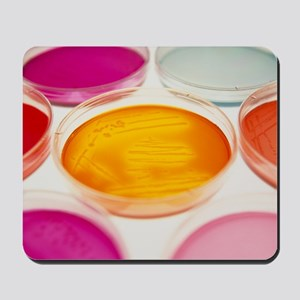 Petri dishes containing bacterial cultur Mousepad