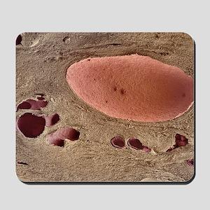 m1950117 Mousepad