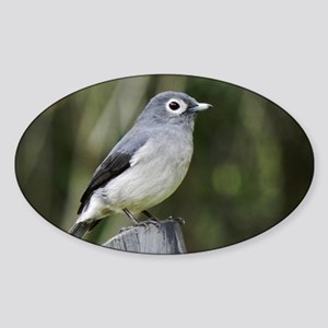 white eyed slaty flycatcher kenya c Sticker (Oval)