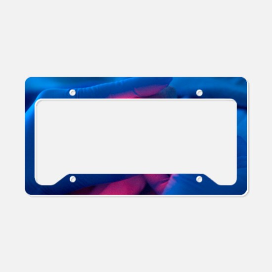 Premature baby License Plate Holder