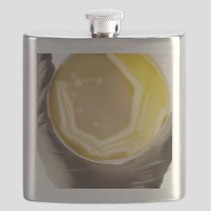 Pseudomonas culture Flask