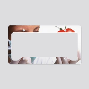 Scientist injects GM tomato License Plate Holder