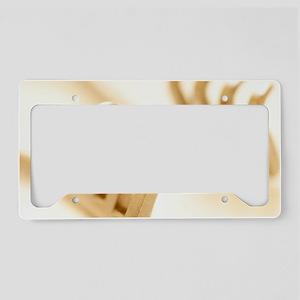 Self retaining retractor License Plate Holder