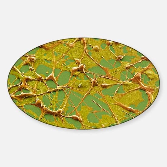 Skin cancer cells, SEM Sticker (Oval)