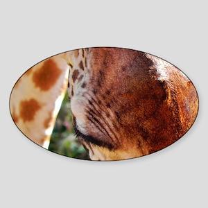 rothschild giraffe closeup kenya co Sticker (Oval)