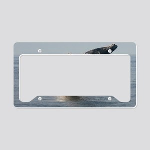 Humpback Whales License Plate Holder