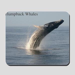 Humpback Whales Mousepad
