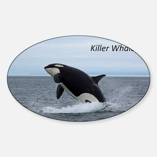 Killer Whales Sticker (Oval)