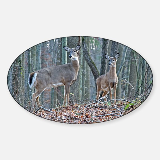 Doe and fawn Sticker (Oval)