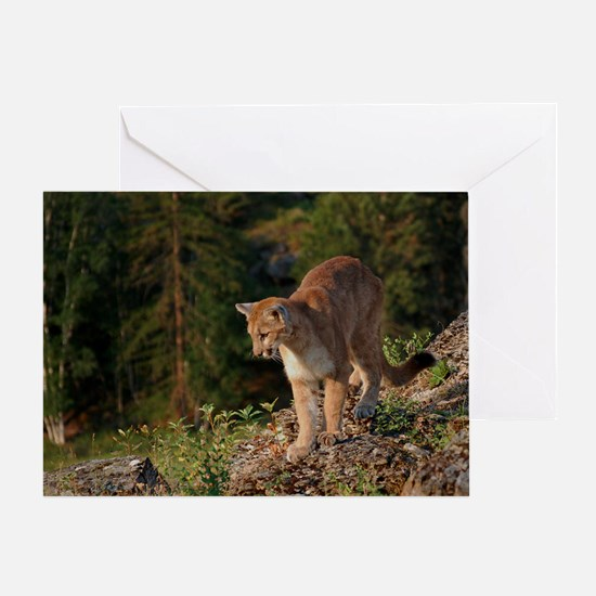 Cougar 1 Greeting Card