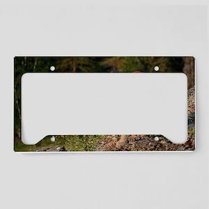 Cougar 1 License Plate Holder