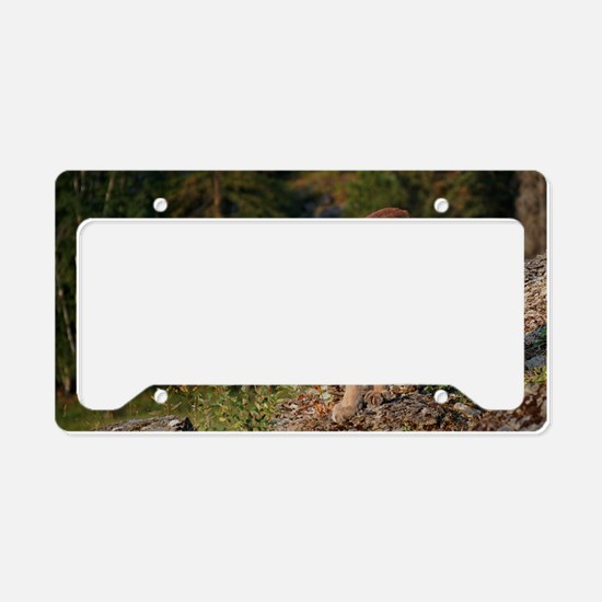 Cougar 1 License Plate Holder