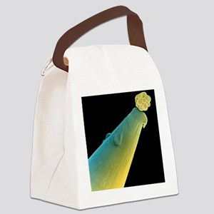 16-cell human embryo on a pin Canvas Lunch Bag