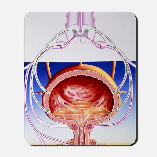 Artwork of a bladder and its reflex arc  Mousepad