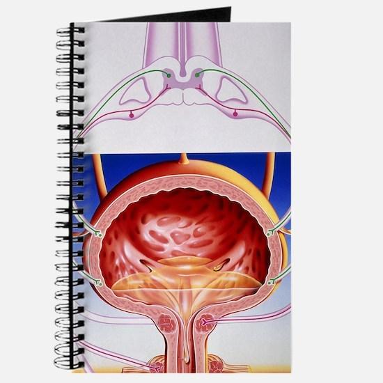 Artwork of a bladder and its reflex arc ne Journal