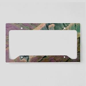 Bladder lining License Plate Holder