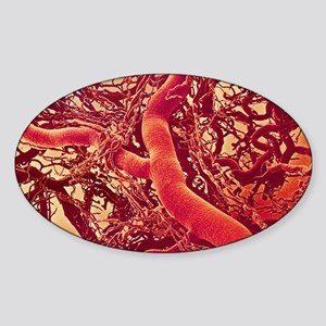 Blood vessels Sticker (Oval)