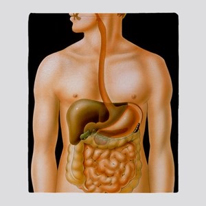 Artwork of the human digestive syste Throw Blanket