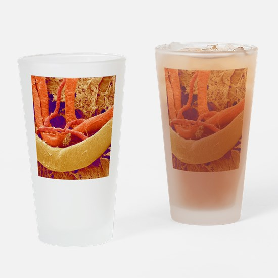 Brain blood vessels, SEM Drinking Glass