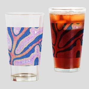 Cerebellum structure, light microgr Drinking Glass
