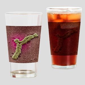 Chromosome rearrangement, SEM Drinking Glass