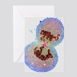 Cell division Greeting Card